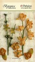 Εικόνα του Floral Ephemera - Amber