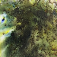 Picture of Infusions Coloured Stains - Olive Tree