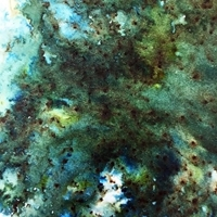 Picture of Infusions Coloured Stains - Green Man