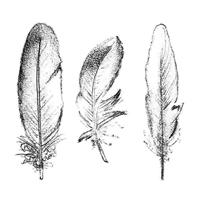 Εικόνα του Spellbinders Shading Stamps - Feathers