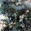 Εικόνα του Infusions Coloured Stains - Sleight Blue