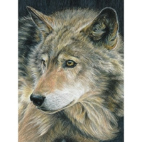 "Picture of Royal & Langnickel Color Pencil By Number Kit 8.75""X11.75"" - Curious Eyes"